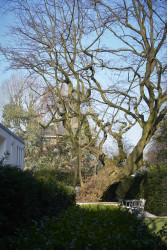 160317 RDA Elm Tree 440