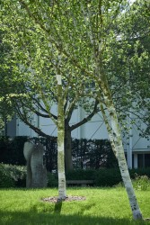 160513 Kajima Stockley Park 194