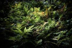 160827 Thetford Forest 065