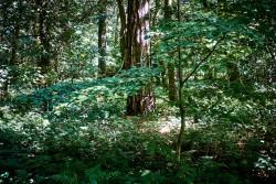 160827 Thetford Forest 090