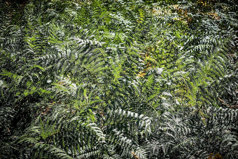 160827 Thetford Forest 200