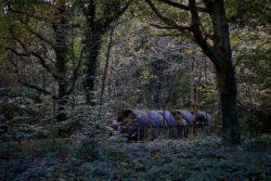 161029-thetford-forest-003