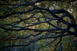 161029-thetford-forest-027