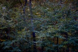 161029-thetford-forest-037