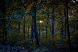 161029-thetford-forest-038