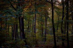 161029-thetford-forest-041