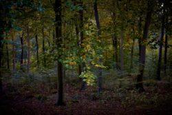 161029-thetford-forest-044