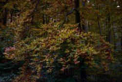 161029-thetford-forest-054