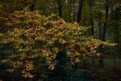 161029-thetford-forest-055