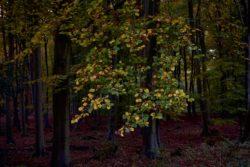 161029-thetford-forest-085