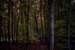 161029-thetford-forest-087