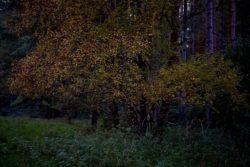 161029-thetford-forest-114