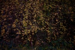 161029-thetford-forest-122