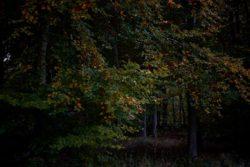 161029-thetford-forest-133