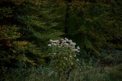 161029-thetford-forest-134