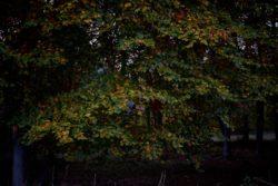 161029-thetford-forest-164