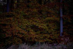161029-thetford-forest-167