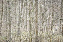 170409 Thetford Forest 104