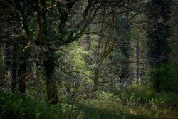 170409 Thetford Forest 161
