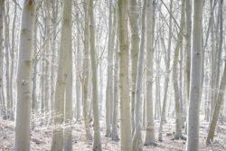 170409 Thetford Forest 323