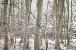 170409 Thetford Forest 347
