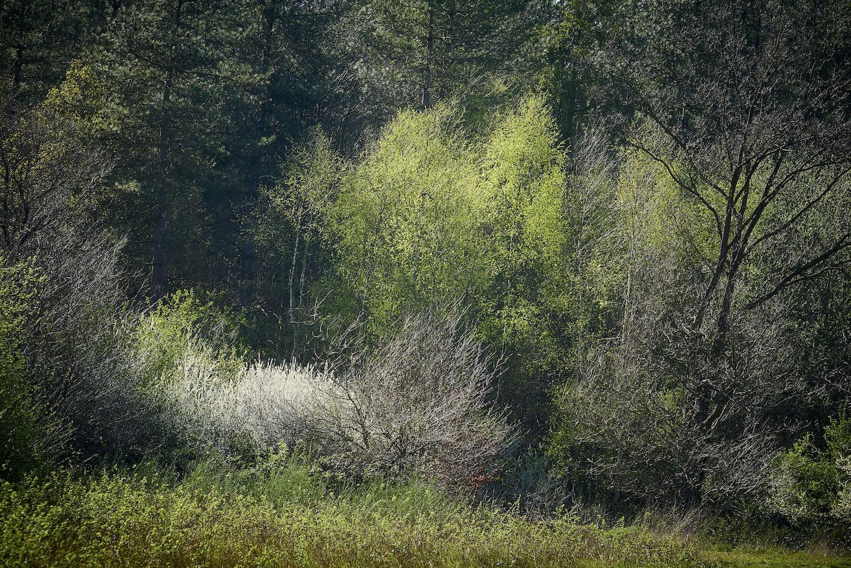 170409 Thetford Forest 390