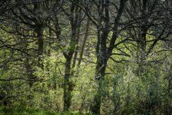 170409 Thetford Forest 416