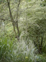 170617 Abbey Dore Garden 630