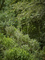 170617 Abbey Dore Garden 665