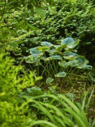 170617 Abbey Dore Garden 667