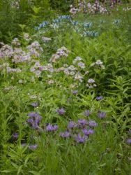 170617 Abbey Dore Garden 698