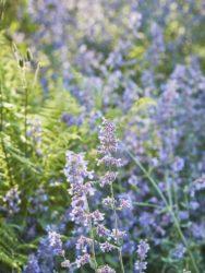 170617 Alison's Garden 005