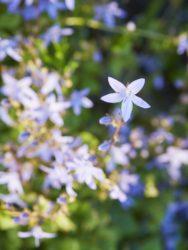 170617 Alison's Garden 025