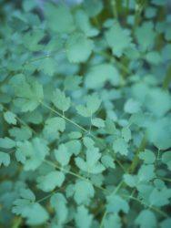 170617 Alison's Garden 079