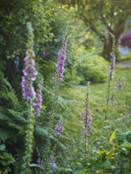 170617 Alison's Garden 155
