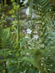 170617 Alison's Garden 168