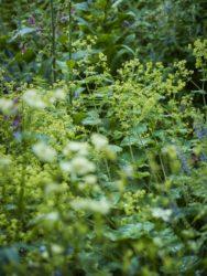 170617 Alison's Garden 203