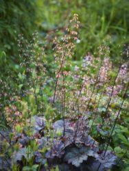 170617 Alison's Garden 248