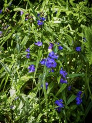 170618 Alison's Garden006