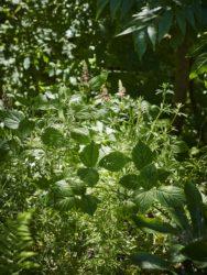 170618 Alison's Garden073