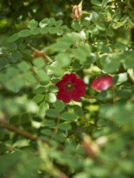 170620 Holehird Gardens 174