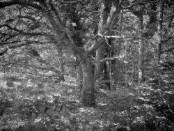 170717 Thetford Forest 216