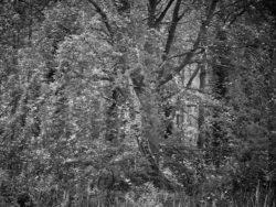 170717 Thetford Forest 225