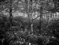 170717 Thetford Forest 235