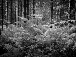 170717 Thetford Forest 253