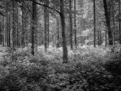 170717 Thetford Forest 266 1