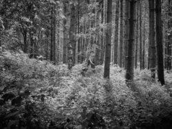 170717 Thetford Forest 274