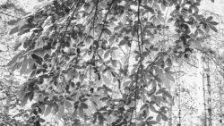 170827 Thetford Forest 055