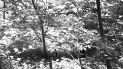 170827 Thetford Forest 064