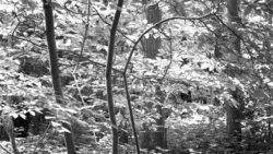 170827 Thetford Forest 066